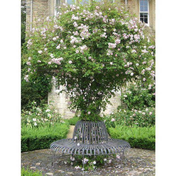 Rose Tree Seat